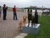 A Goldberg dogs 007