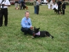 A Goldberg dogs 010
