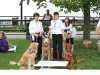 G Symeonides Dogs 002