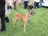 G Symeonides Dogs 013