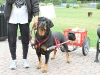 G Symeonides Dogs 020