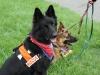 H Borkpwski Dogs 002