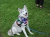 H Borkpwski Dogs 005