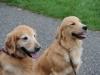 H Borkpwski Dogs 009
