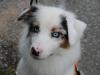 H Borkpwski Dogs 012