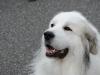 H Borkpwski Dogs 014