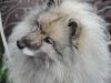H Borkpwski Dogs 016