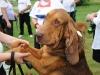 H Borkpwski Dogs 017