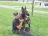 K Brasswell Dogs 001