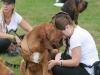 K Brasswell Dogs 002