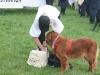K Brasswell Dogs 004