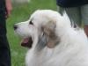 K Brasswell Dogs 006