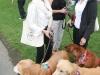 K Brasswell Dogs 007