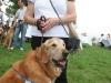 K Brasswell Dogs 008