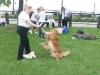 K Brasswell Dogs 009
