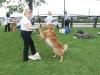 K Brasswell Dogs 010