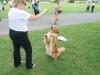 K Brasswell Dogs 011