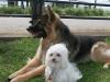 K Brasswell Dogs 012