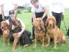 K Brasswell Dogs 015