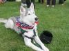 K Brasswell Dogs 017