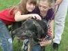 K Brasswell Dogs 018