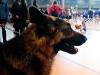 22711FOA_DogShow (13 of 32)