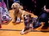 22711FOA_DogShow (30 of 32)