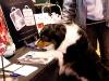 22711FOA_DogShow (9 of 32)