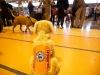 RCC Dog Show 068