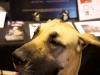 RCC Dog Show 074