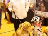 RCC Dog Show 096