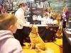 RCC Dog Show 098