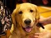 RCC Dog Show 116