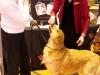 RCC Dog Show 139
