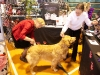RCC Dog Show 157