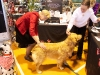 RCC Dog Show 158